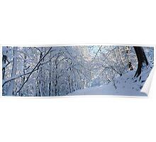 Snow-laden trees Poster