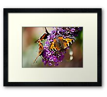 Fly Away Butterfly Framed Print