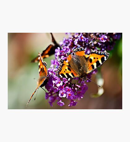 Fly Away Butterfly Photographic Print