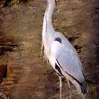 Grey Heron by Catherine Hamilton-Veal  ©