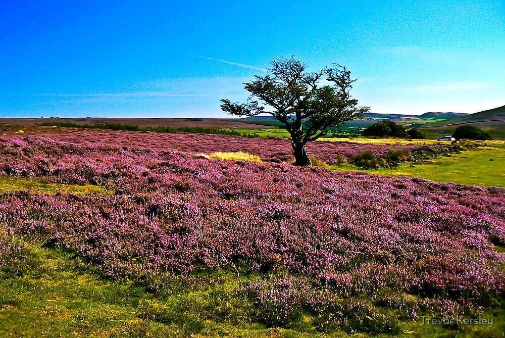 Hawnby Moor #2 by Trevor Kersley