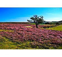 Hawnby Moor #2 Photographic Print