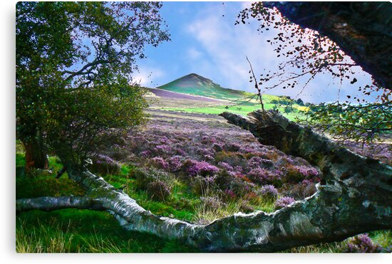 Hawnby Moor #7 by Trevor Kersley