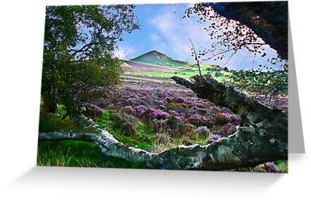 Hawnby Moor #7 by Trevor Kersley