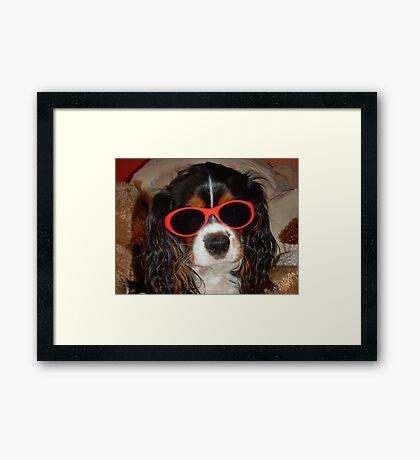 Charlie Girl the COOL DUDE !!! Framed Print