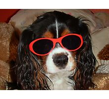 Charlie Girl the COOL DUDE !!! Photographic Print