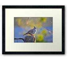 Crested Pigeon On Gate Post To The Back Paddock. Brisbane, Queensland, Australia. Framed Print