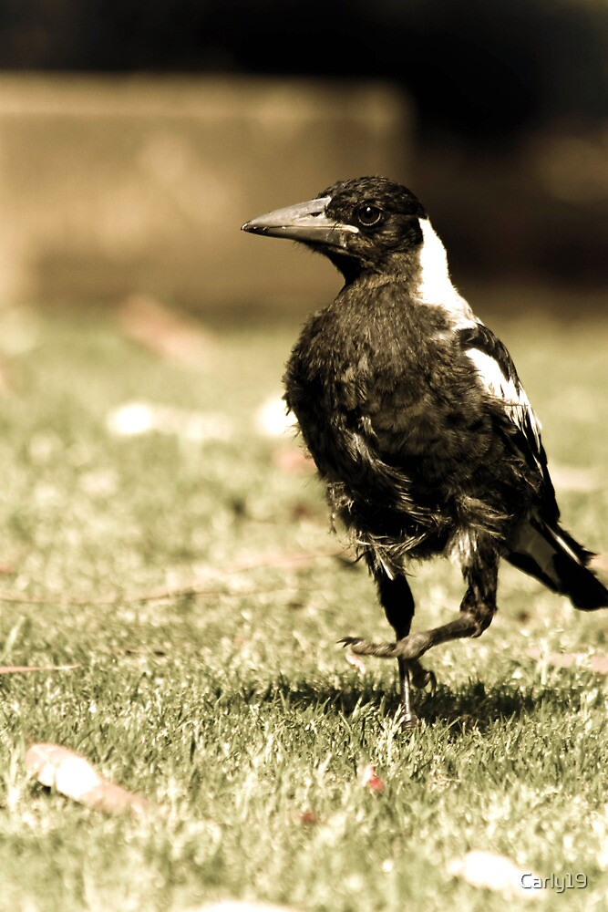 The Scraggly Magpie  by Carly19