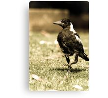 The Scraggly Magpie  Canvas Print