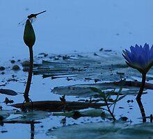 Dragonfly by Aldi221