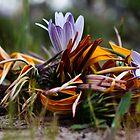 bouquet by Dan A'Vard
