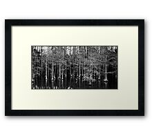 Cypress Grove Framed Print