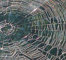 Web by Gail Griffiths