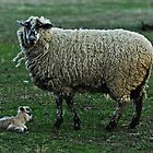 The Tinyest Lamb and Moma On Guard by Gregory J Summers