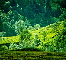 Highland Hillside by Geoff Spivey