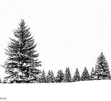 Winter Morning by PixelPerfectPho