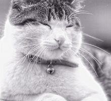 Ritratto di un gatto felice by marziafrank