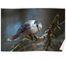I See You - Gray Jay Poster
