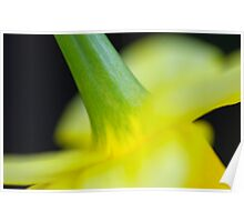 Close Up Abstract Daffodil Poster