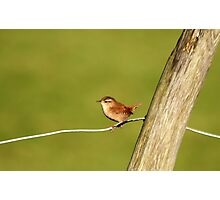 Wren Photographic Print