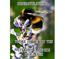 Bee on Lavender Banner Photographic Print