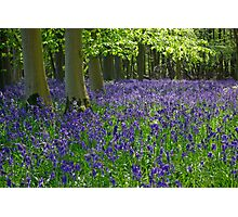 Beautiful Bluebell Morning Photographic Print