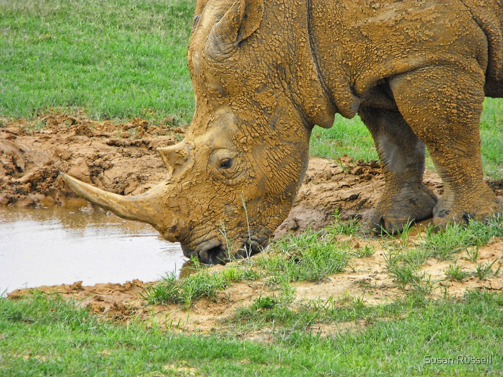 Rhino at Fossil Rim Wildlife Center by Susan Russell