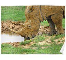 Rhino at Fossil Rim Wildlife Center Poster