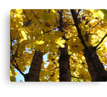 Looking Up Autumn Canvas Print