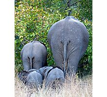Elephant Roadblock Photographic Print