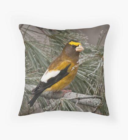 Evening Grosbeak On Pine 2 Throw Pillow