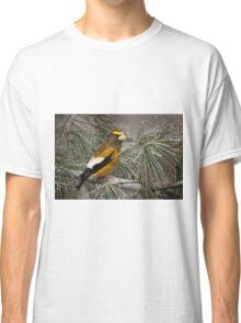 Evening Grosbeak On Pine 2 Classic T-Shirt