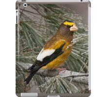 Evening Grosbeak On Pine 2 iPad Case/Skin