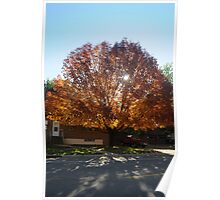Fall Morning Tree Poster