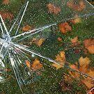 Umbrella by Anne McKinnell