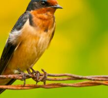 Barn Swallow On Barbwire Sticker