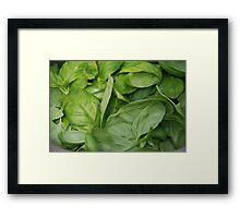 Basil Leaves Framed Print