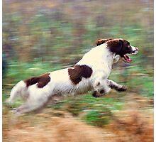 Aye aye sir! full speed ahead Photographic Print