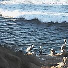 Pelicans & the Pacific by heatherfriedman