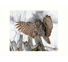 Great Grey Owl - Dunrobin, Ontario Art Print