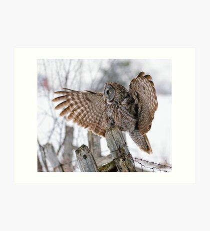 Great Grey Owl - Dunrobin, Ontario Art Print