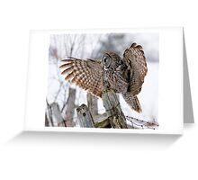 Great Grey Owl - Dunrobin, Ontario Greeting Card