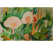 Calla lily with frogs Photographic Print