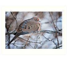 Mouring Dove In Shrubs Art Print