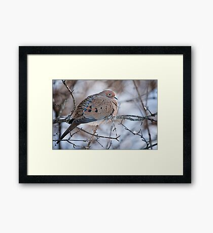 Mouring Dove In Shrubs Framed Print