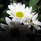 daisy's by gabbielizzie