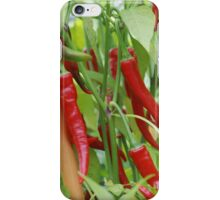 Red hot chilli iPhone Case/Skin