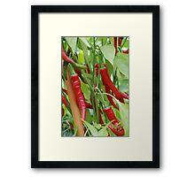 Red hot chilli Framed Print