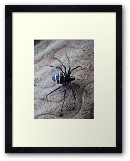 black widow  spider by ojok ivan willy