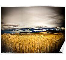 Wheat Field, Contemanskloof Poster